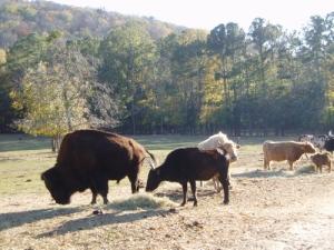 livestock2